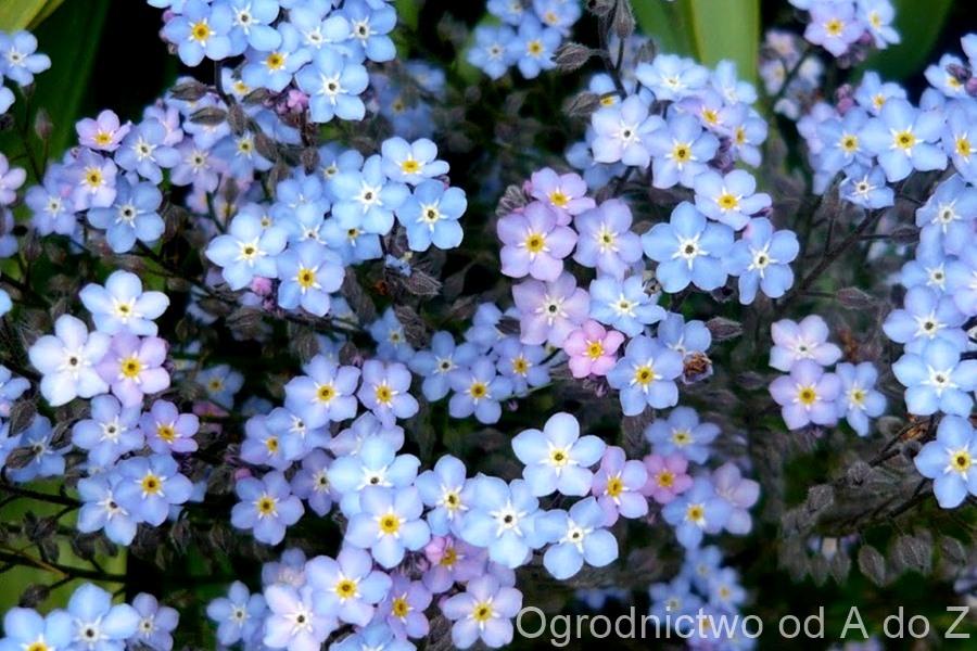 Kwiaty na balkon i taras pielęgnacja roślin