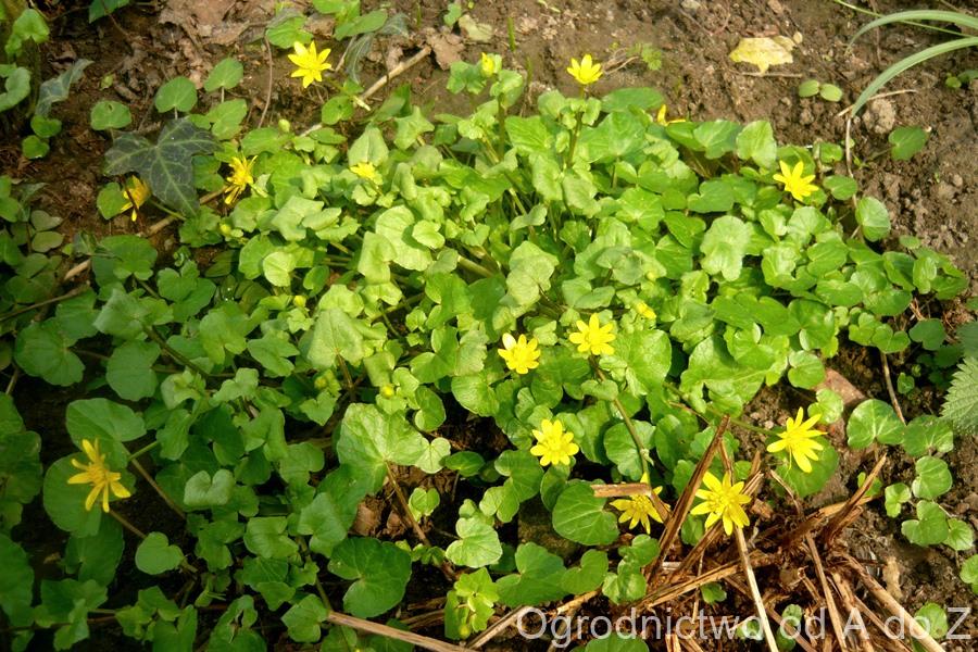 Nie rezygnujmy z naturalistycznych zakątków w ogrodzie