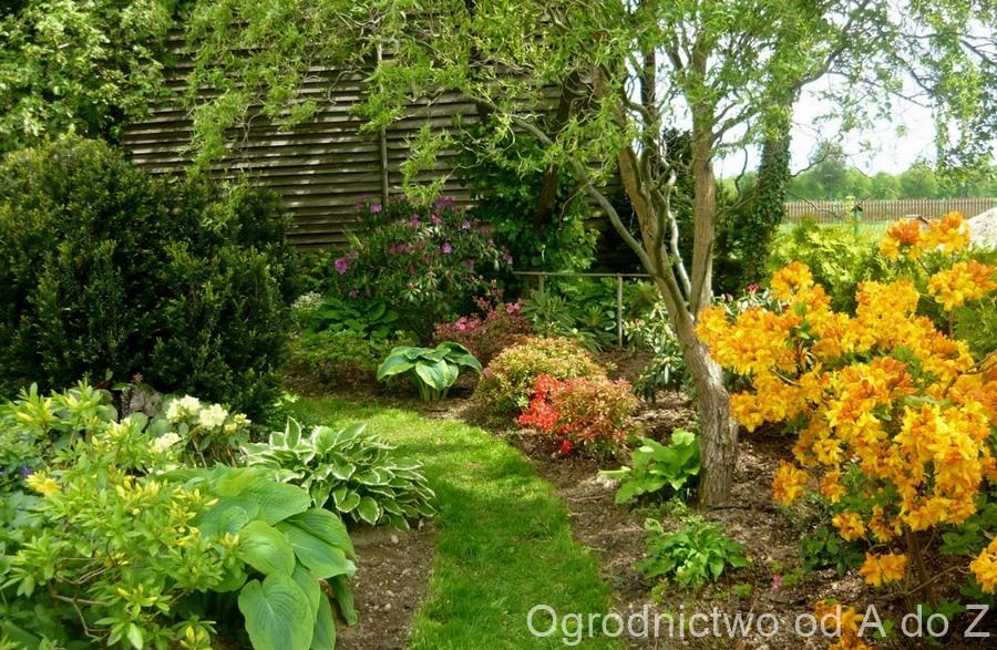 Późna wiosna w ogrodzie