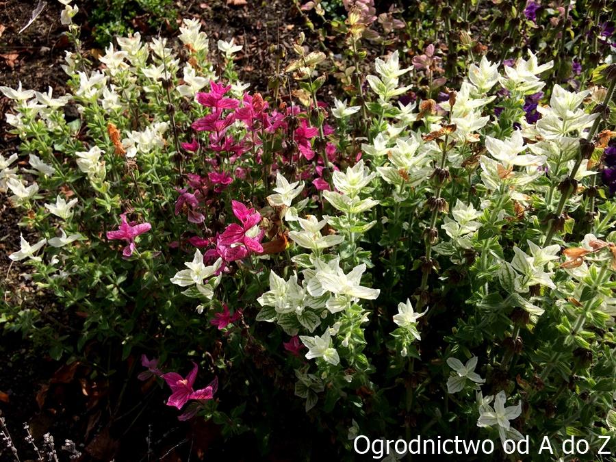 Rośliny jednoroczne